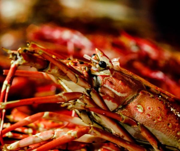 things to do in salem, clam bake house of the seven gables 2017