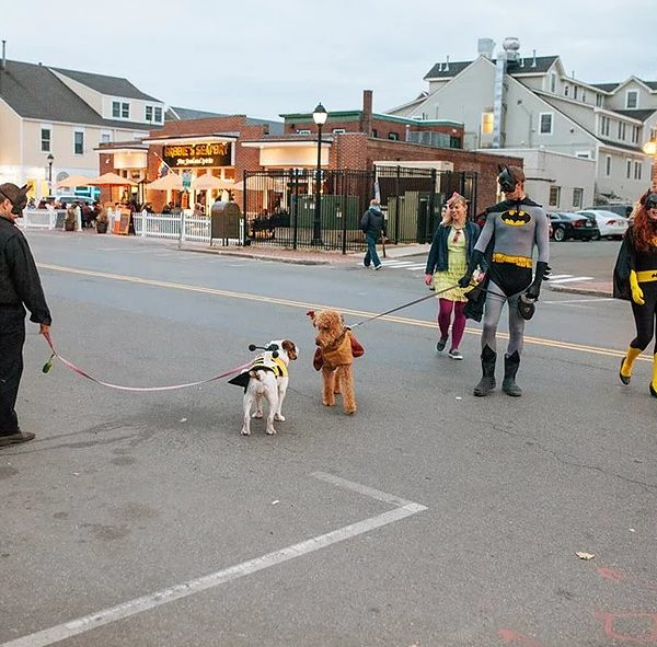 things to do in salem ma, pet friendly salem ma
