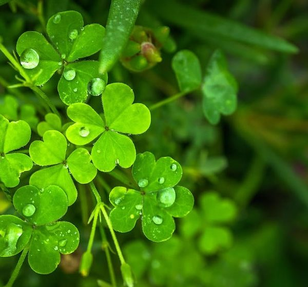 things to do in salem, st. patricks day 2017 salem ma events